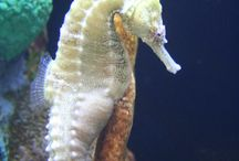 SEA HORSE / by NEGRA GARCIA