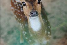 Deer / by Christina Baker