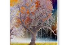 Trees / by Angelandspot