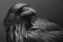 Crows.... / Crows or ravens,,,near to my soul.... / by Ken Arnold