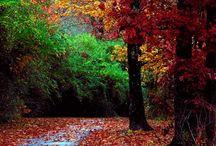 Autumn  / by Michelle Marshall