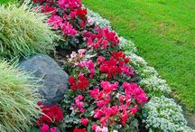 Gardening/Yard decorations / by Lori Connell