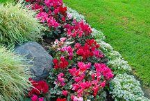 Gardening Ideas / by Shannon Bere