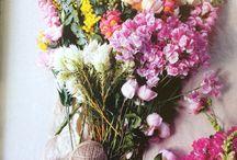Flowers / by Amanda Henderson