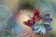 Plantes et fleurs / by Lyne Bourgon