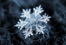 Snowflakes / by Emily Phillips
