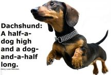 Doxies / by Laura Clair