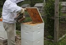 Bee's / by Nancy Scott