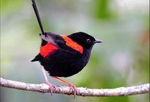 Birds in my backyard / by Judy M