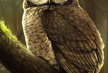 Owl love / by Joshua Page