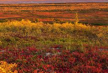 Alaska / by George McGowan
