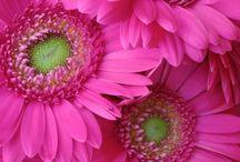 Rocío flores 1  / Rocío flores 1  / by jose alonso