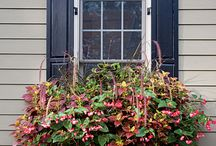 13c - Hanging Baskets / Window Boxes / by Janet Clarke