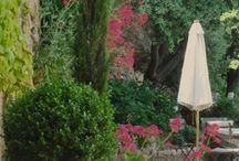 topiary / by antonio Aguilar