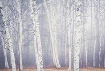 winter / by Tanchi Pérez Conejeros