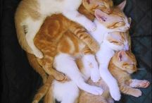kitties / by Jane Hawley