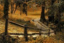 Autumn Beauty / by FaithT