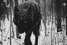 Animals / by amanda mulero