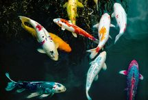Outdoor Aquatics / by That Fish Place - That Pet Place