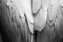 <3 LOVE> Wings / by Melissa Martin