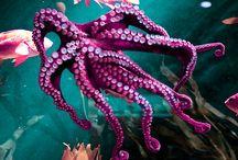 Sea Life / by Jackson Gray