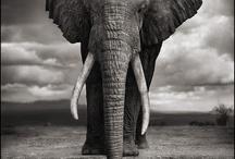 Animals :) / by Ashley Lehman