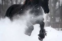horses / by Pat Patterson