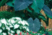 Gardening / by Granny Hagins