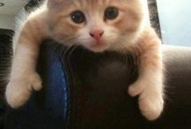 Cute animals :) / by Andrea Anderson