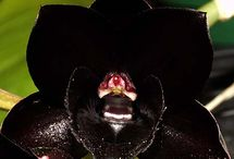 Black As Night / by Shirlee Harris