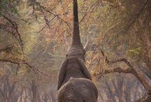 Elephants  / by Karolyn Jackson