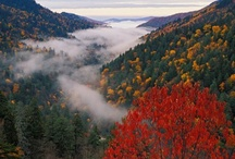 Mountain Girl / Born in Chattanooga Tn., Lived Adult Life in Sand Mountain and Blue Ridge Mountains... The Mountains go  so Deep in my Soul.  / by Theresa White
