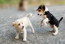 Puppies,kittens and other cuties for Rachel / by Francis Hunt