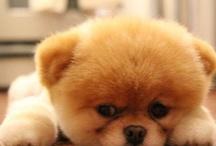 Too Cute / by Jenifer Guzman