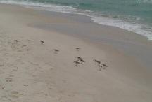 Some Beach, Somewhere...... / by Sharlene Linder