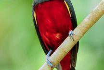 A Little Birdie Told me!! / by Lorena Torrez