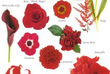 Color: Red / by Rose of Sharon Floral Designs, Althea Wiles