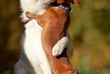 Animals / All creatures, funny memes, random absurdities...etc. / by Victoria Pierce