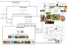 Animal Kingdom / Charts and Cards explaining the Animal Kingdom / by Montessori Print Shop