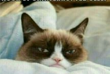 Grumpy Cat / If I were a cat... / by Kaye Coleman