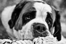 Dogs In Black and White / Black and White Dog Photography #DogsinBlackAndWhite #Photography #DogPhotography #Dogs #Puppy / by Dog Breeds