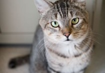 Adopted Cats / by Atlanta Pet Rescue & Adoption