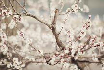 Nature-God's beautiful creation / by Beth Jones