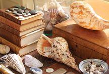 Shells / by Judith Cameron