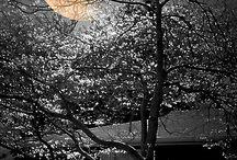 Luna...... / moon, majestic & romantic...... / by Nita