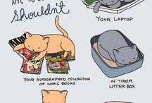Oh kitty cats! / by Megan McMillan