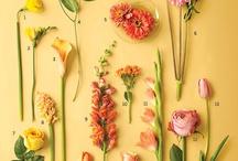 Garden Ideas / by Kira Hamann