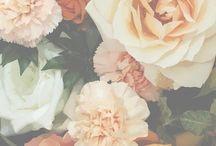 Bloom / by Abigail