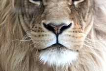 Close Up: Animals / by Nikki Wilson