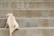 Puppies  / by Brittani Cachine